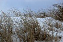 Grassgrass — Stock Photo