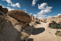 Parque Nacional Joshua tree — Fotografia de Stock