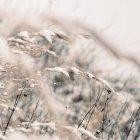 Herbes sauvages grandir extérieur — Photo de stock