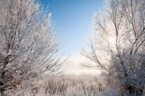 Wild winter forest — Stock Photo