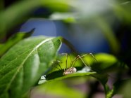 Araignée dans leur habitat naturel — Photo de stock
