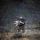 Wet dog shaking head — Stock Photo