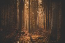 Sole di sera sul glade della foresta — Foto stock