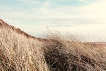 Dry grass at meadow — Stock Photo