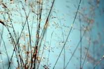 Silhouettes of wild flowers and grass — Stock Photo