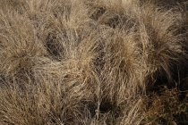 Close-up view of dry grass — Stock Photo