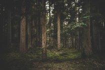 Forêt de bel été — Photo de stock