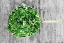 Листья зеленого салата в сковороде — стоковое фото