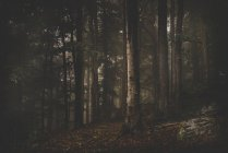 Лес с лиственные деревья на склоне — стоковое фото