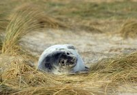 Joint couché sur la plage — Photo de stock