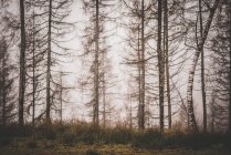 Fog in the forest at the morning — Stock Photo