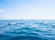 Delfini nel mare di Sorrento — Foto stock