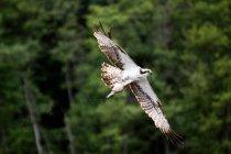 Wild eagle outdoors — Stock Photo
