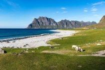 Troupeau de moutons en pâturage en plein air — Photo de stock