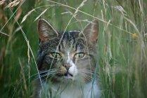 Gato listrado em campo — Fotografia de Stock