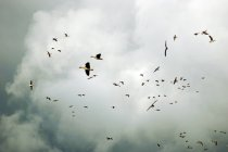 Gänse-Knäuel im Himmel — Stockfoto