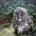 Kopfschuss Eule Vogel — Stockfoto