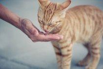 Кошка, едят из рук — стоковое фото