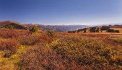 Cedros e bétulas no vale de Altai — Fotografia de Stock