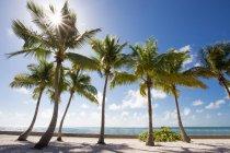 Пальмы на берегу песчаного моря — стоковое фото