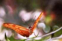 Schmetterling sitzt auf grünes Blatt — Stockfoto