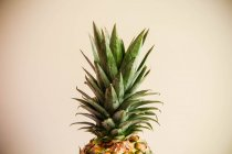 Pineapple leaves on beige background — стокове фото