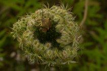 Detailansicht der Wildpflanze und kriechenden bug — Stockfoto