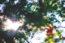 Листва растений листья — стоковое фото