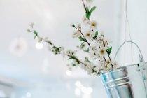 Blühende kirsche baum im frühling — Stockfoto
