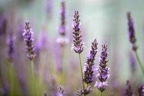Flores silvestres em Prado verde — Fotografia de Stock