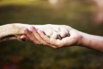 Close-up view of person hand holding dog paw — Stock Photo