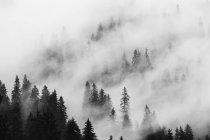 Paesaggio con foresta nebbiosa — Foto stock