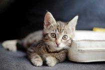 Kitten lying on couch — Stock Photo
