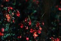 Wild flowers on green meadow — Stock Photo