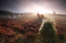 Туманный рассвет над холмами — стоковое фото