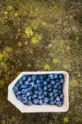 Fresh blueberries in box — Stock Photo