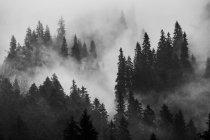 Nebbia nella foresta al mattino — Foto stock