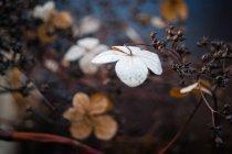 Pflanze-Zweig mit Trockenblumen — Stockfoto