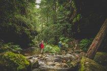 Tir nature de deux personnes marchant dans la forêt — Photo de stock