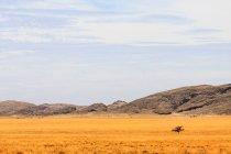 Vista panoramica di un paesaggio di natura in Africa — Foto stock