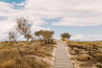 Dune with yellow grass and wooden path — Stock Photo