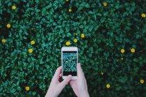 Vue partielle de la personne qui détient de téléphone mobile au-dessus de feuillage vert herbe à fleurs jaunes — Photo de stock