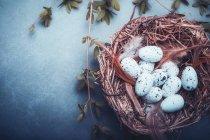 Vista de ángulo alto de huevos en un nido de pájaro - foto de stock
