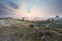 Живописный природный ландшафт Мисти поля под солнечным небом в Нидерланды — стоковое фото
