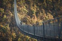 Vue de la forte inclinaison du pont suspendu au-dessus de la rivière contre les arbres. — Photo de stock