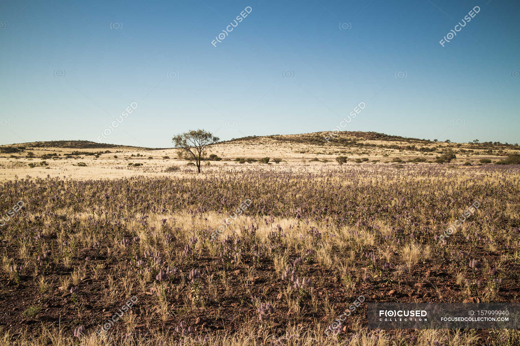 Desert landscape with dry grass and tree — Stock Photo ...