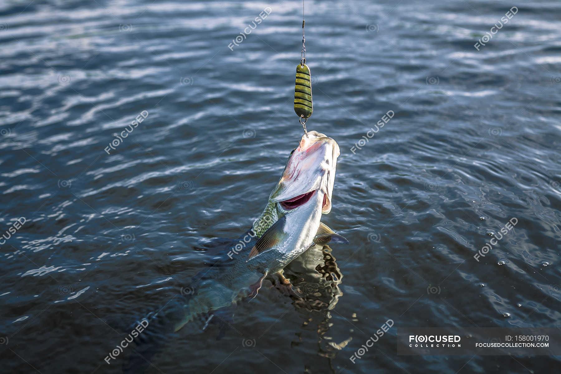 「fish on hook」的圖片搜尋結果