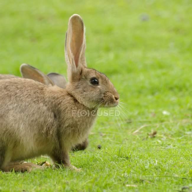 Обрезанный вид на зелёный луг кроликов — стоковое фото