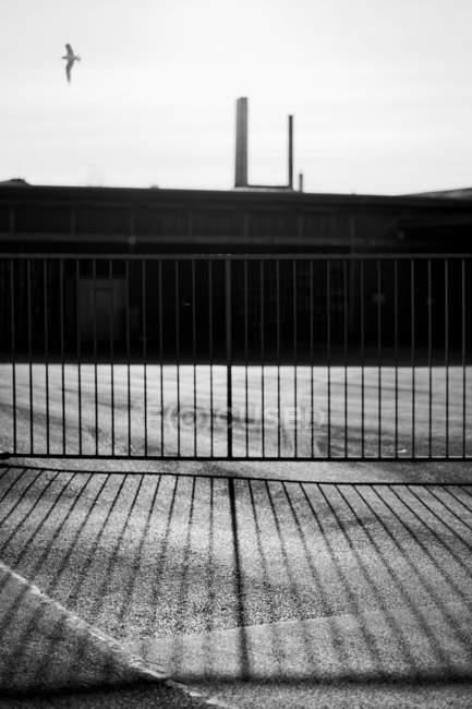 Uccello che vola sopra il portone di impianto industriale — Foto stock