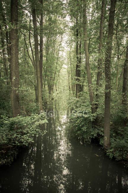 Лесной пейзаж с рекой — стоковое фото
